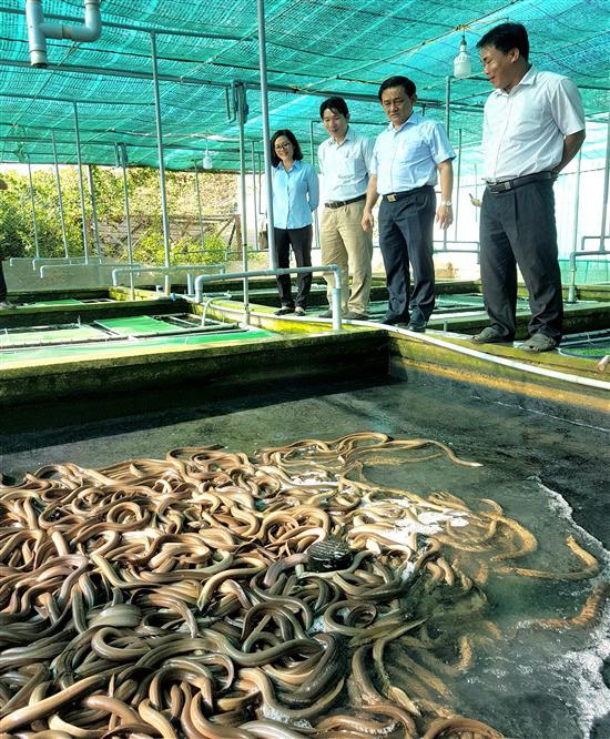 Trà Vinh: Nuôi hơn 21.000 con lươn đồng trong bể xi măng, kéo vỉ lên khách bất ngờ vì thấy toàn lươn to bự - Ảnh 4.
