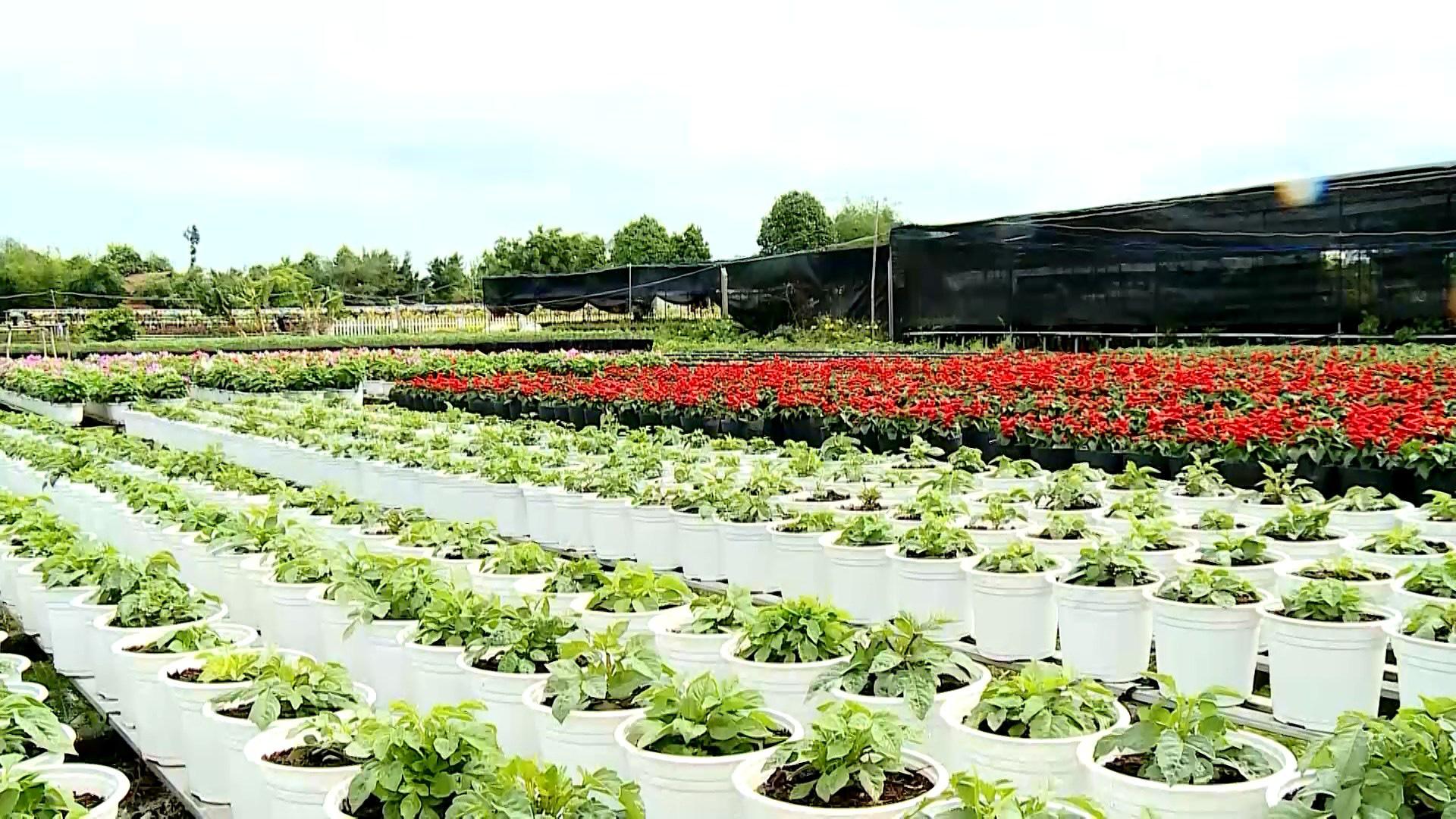 Agribank góp phần tạo sức bật mới cho làng hoa Sa Đéc   - Ảnh 5.