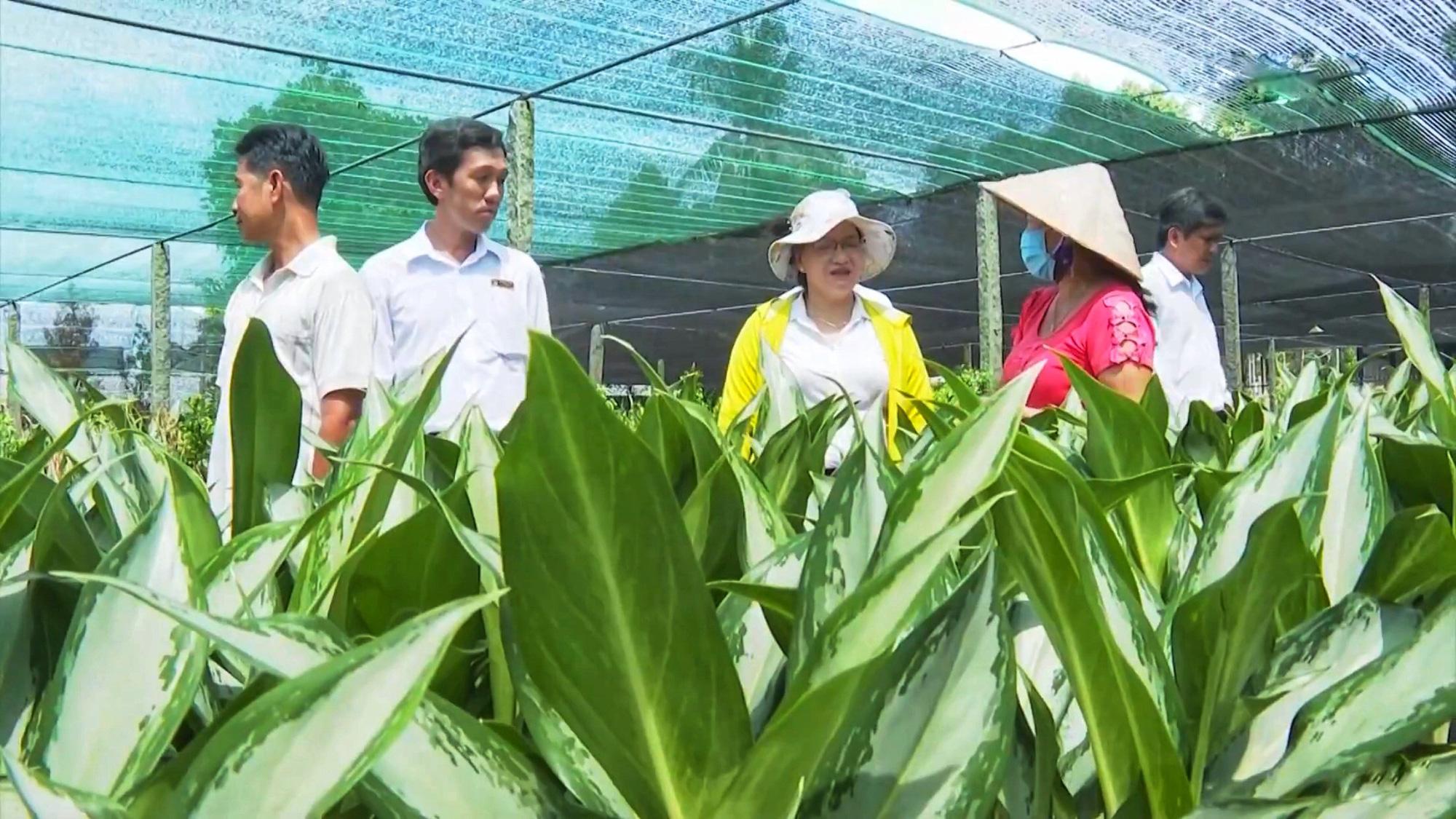 Agribank góp phần tạo sức bật mới cho làng hoa Sa Đéc   - Ảnh 4.