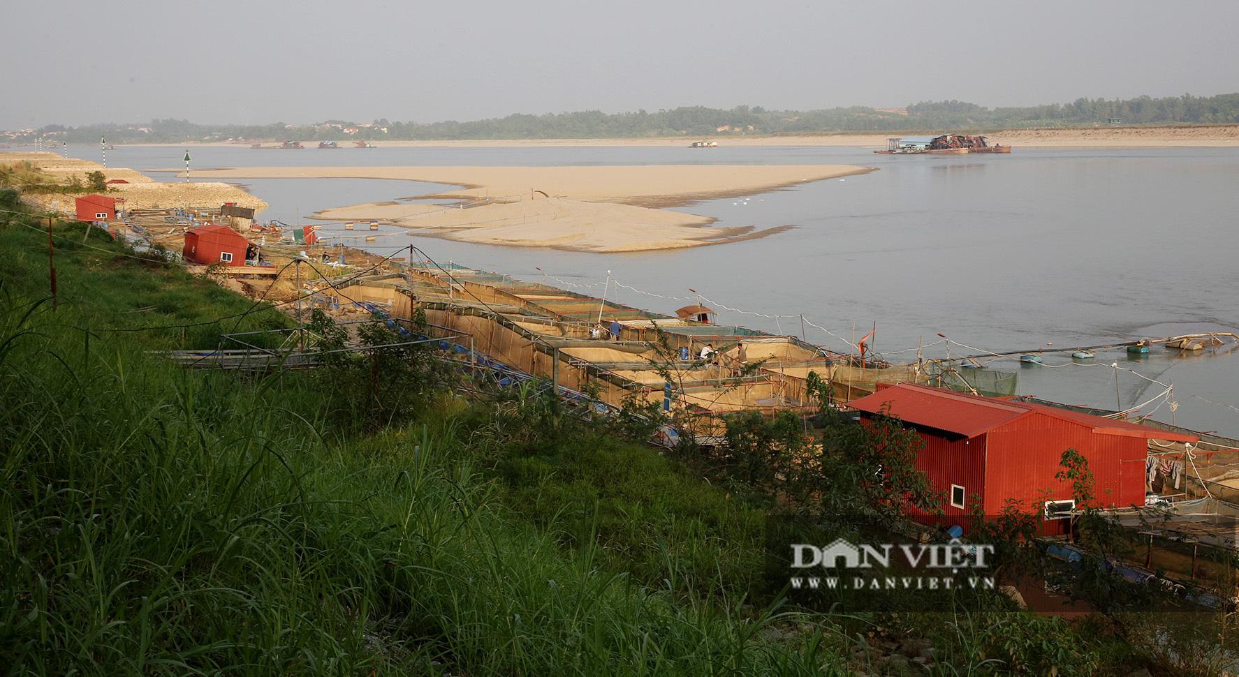 Dân nuôi cá trên sông Đà hút cát để cứu cá do nước sông cạn - Ảnh 1.