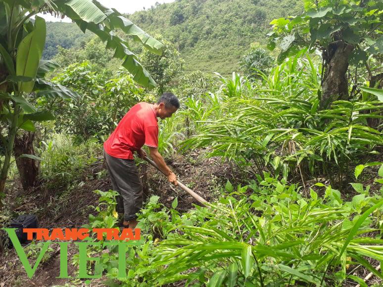 """Lợi ích """"kép"""" từ phát triển kinh tế rừng ở Điện Biên - Ảnh 5."""