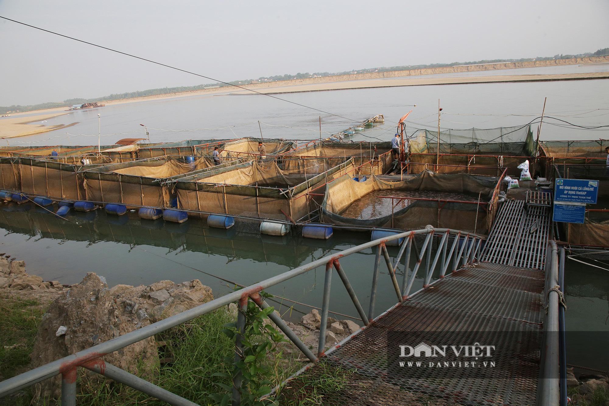 Dân nuôi cá trên sông Đà hút cát để cứu cá do nước sông cạn - Ảnh 12.