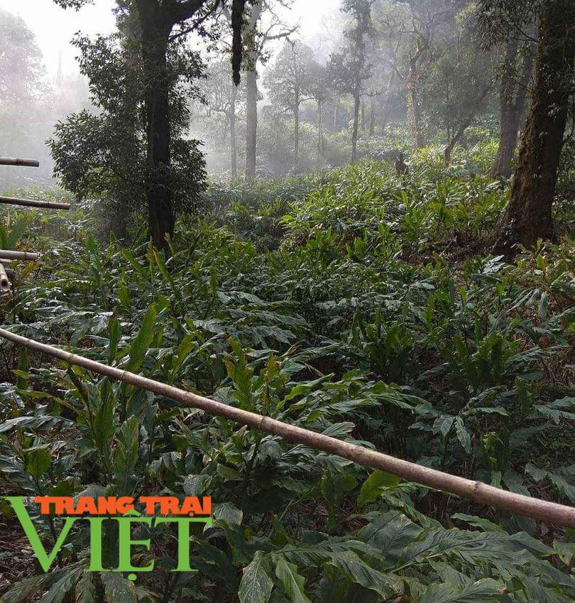 """Lợi ích """"kép"""" từ phát triển kinh tế rừng ở Điện Biên - Ảnh 3."""