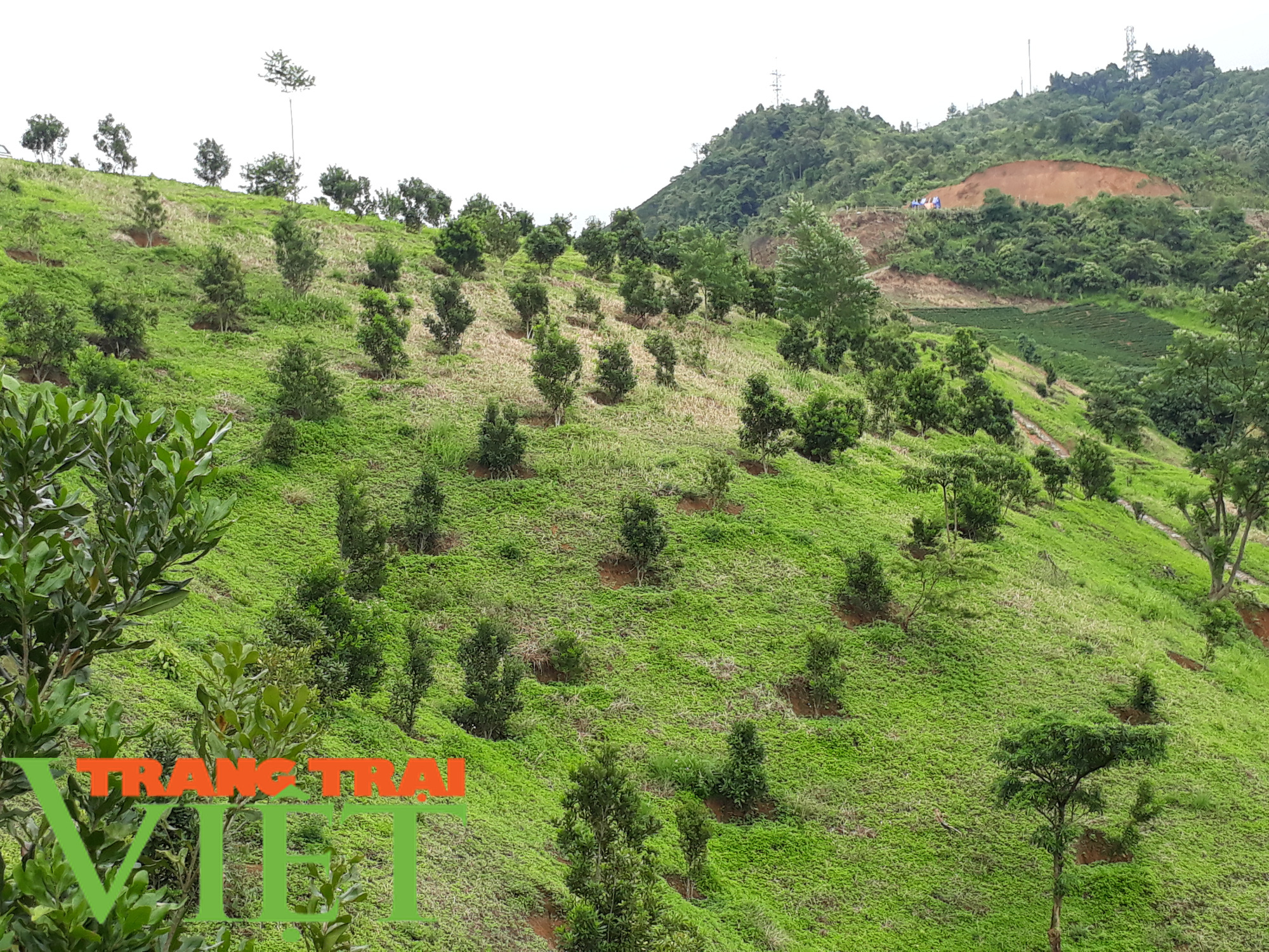 """Lợi ích """"kép"""" từ phát triển kinh tế rừng ở Điện Biên - Ảnh 6."""