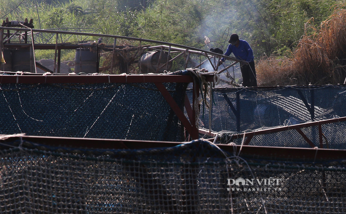 Dân nuôi cá trên sông Đà hút cát để cứu cá do nước sông cạn - Ảnh 5.