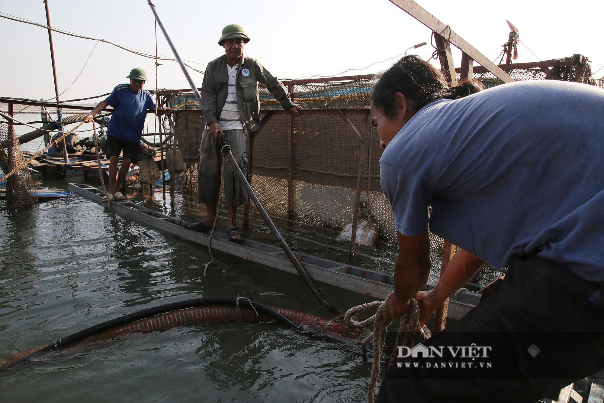 Dân nuôi cá trên sông Đà hút cát để cứu cá do nước sông cạn - Ảnh 6.