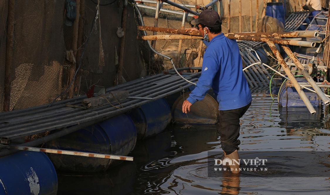 Dân nuôi cá trên sông Đà hút cát để cứu cá do nước sông cạn - Ảnh 9.