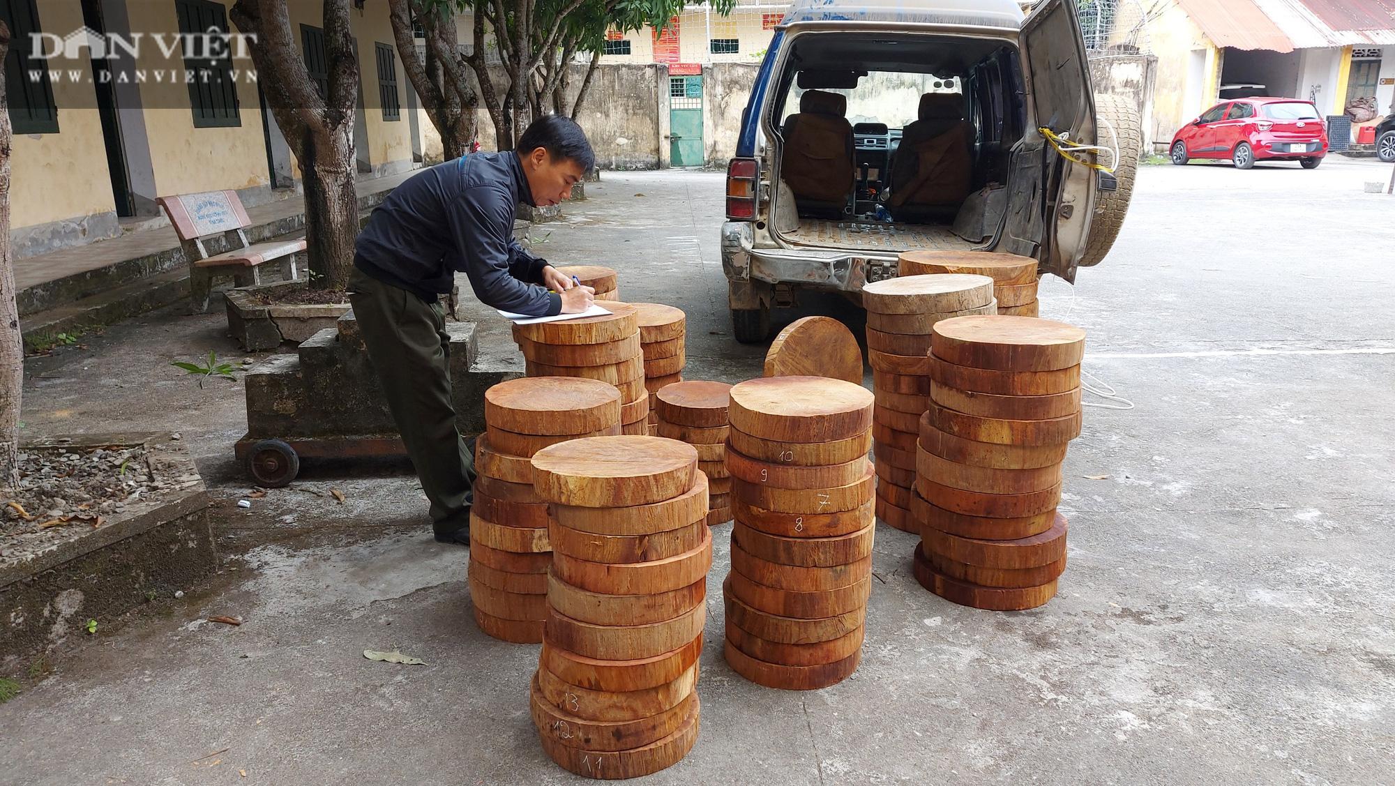 Hà Giang: Kiểm lâm vào cuộc, đối tượng khai thác buôn bán thớt nghiến không có mặt ở địa phương - Ảnh 3.