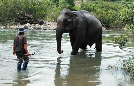 Ký ức về con voi cuối cùng ở Gia Lai - Ảnh 1.