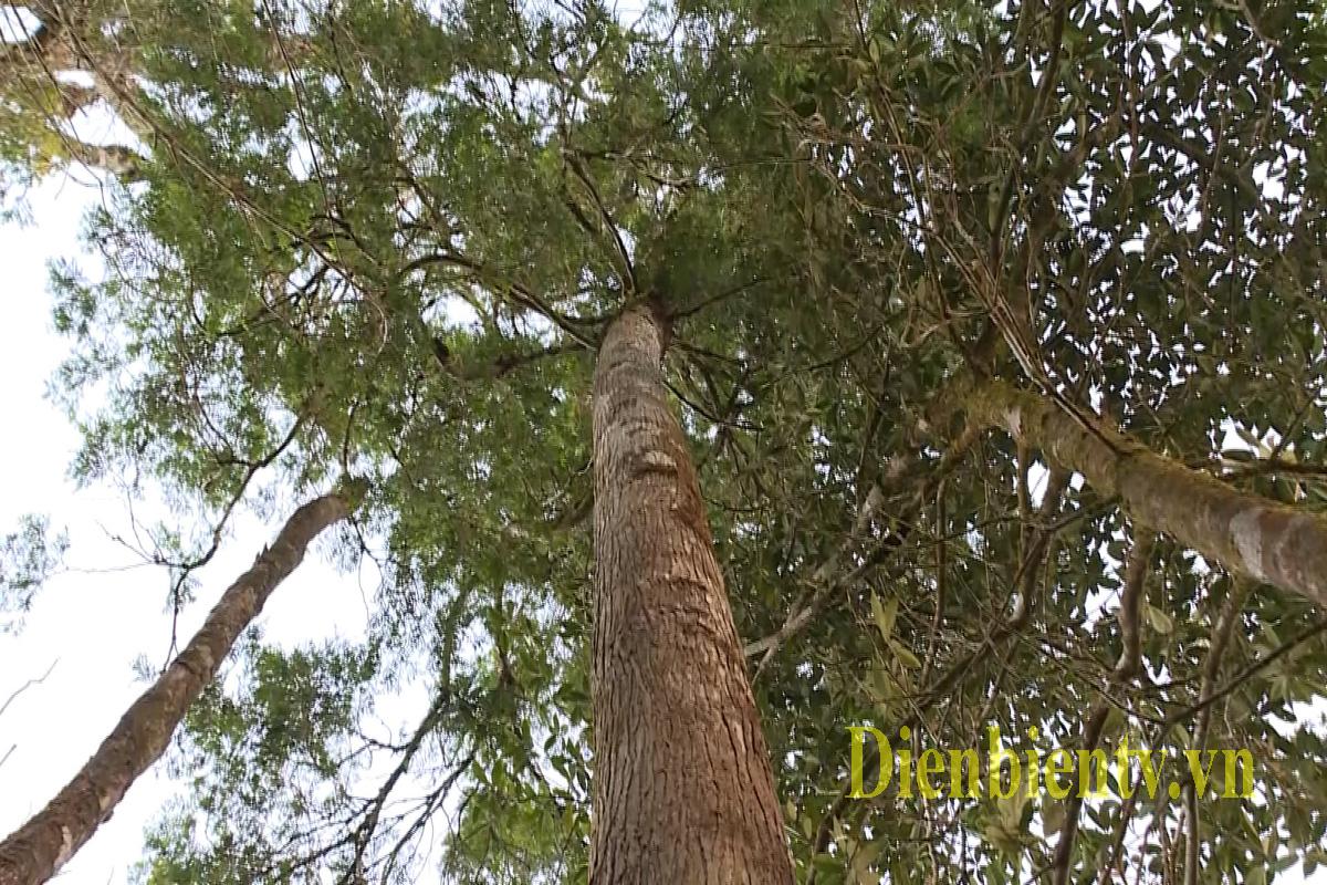Bản nghèo Pơ Mu giữ rừng bền vững - Ảnh 3.