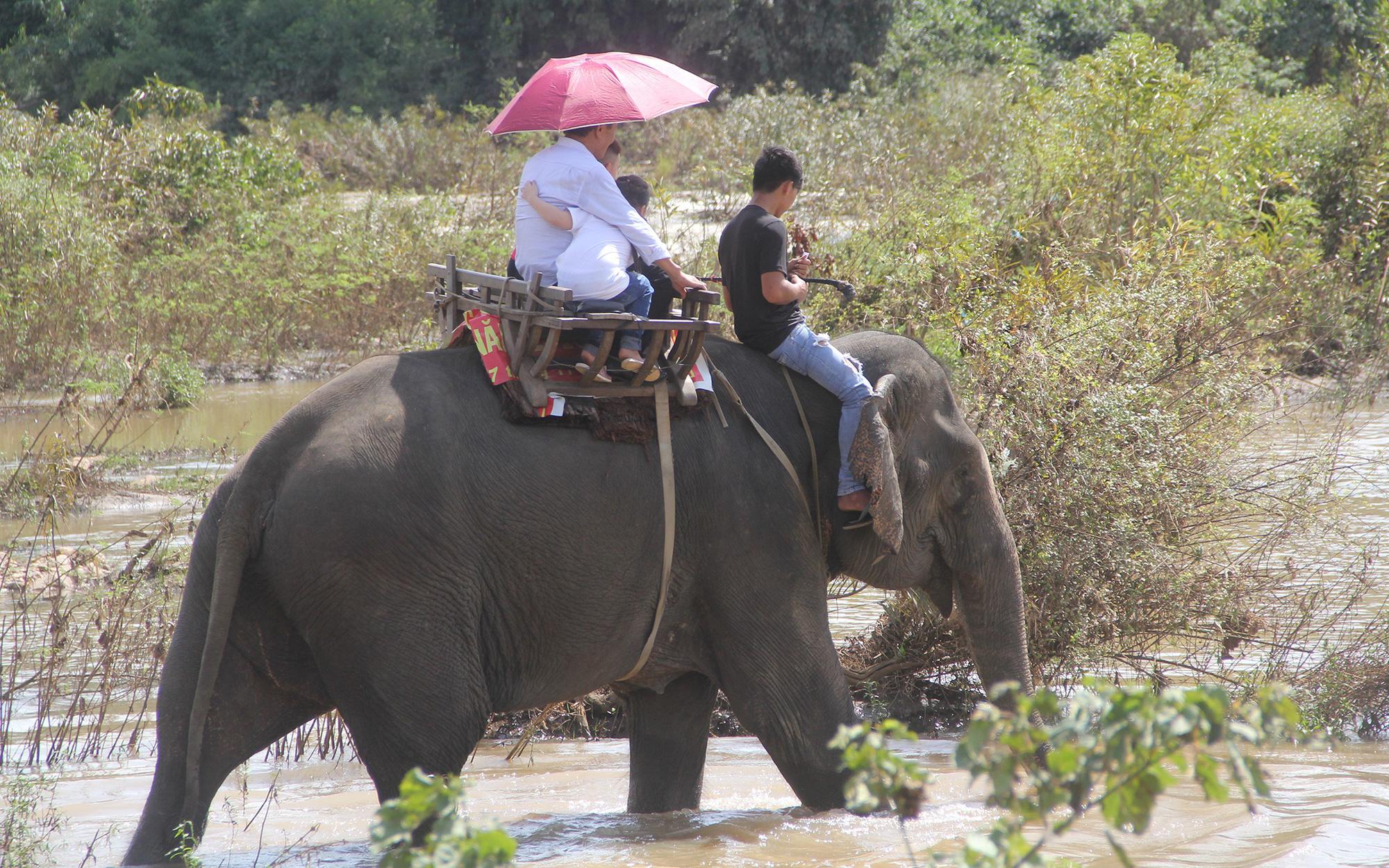 Ký ức về con voi cuối cùng ở Gia Lai - Ảnh 2.