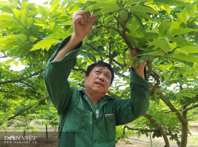 OCOP tạo sức bật nông sản xứ Lạng - Ảnh 1.