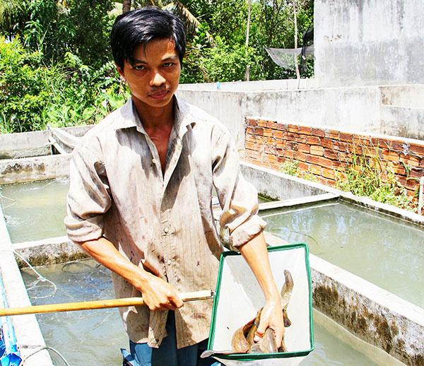 """Hậu Giang: Một ông nông dân tỷ phú nuôi loài cá đặc sản ví như """"nhân sâm nước"""" mà kiếm tiền tỷ - Ảnh 1."""