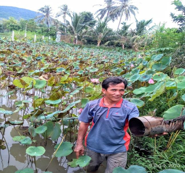 Phú Yên: Bỏ phố về làng dưỡng già, trồng bưởi da xanh chơi chơi, ai ngờ ra nhiều trái, bà con chòm xóm trồng theo - Ảnh 4.