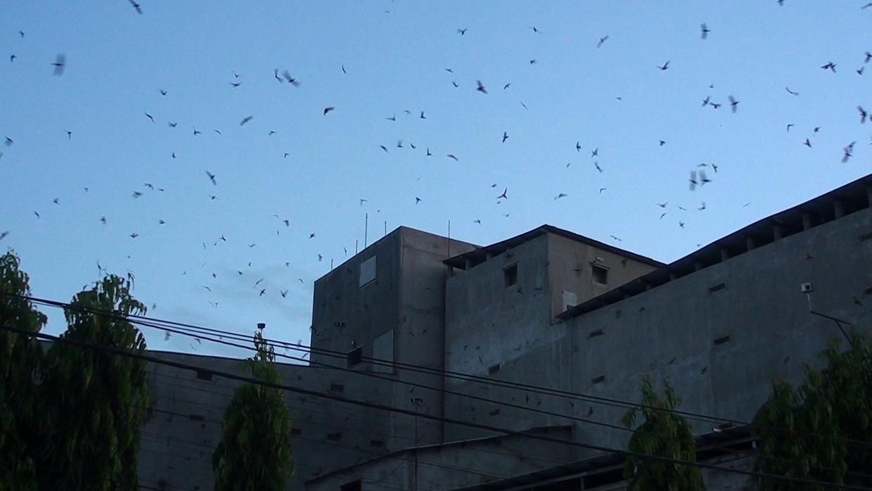 """Gia Lai: Xây nhà lầu nuôi """"chim tiền tỷ""""-nghề siêu lợi nhuận và là """"mỏ vàng"""" ở thị xã Ayun Pa - Ảnh 1."""