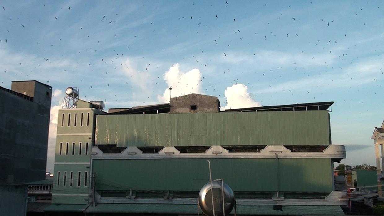 """Gia Lai: Xây nhà lầu nuôi """"chim tiền tỷ""""-nghề siêu lợi nhuận và là """"mỏ vàng"""" ở thị xã Ayun Pa - Ảnh 4."""