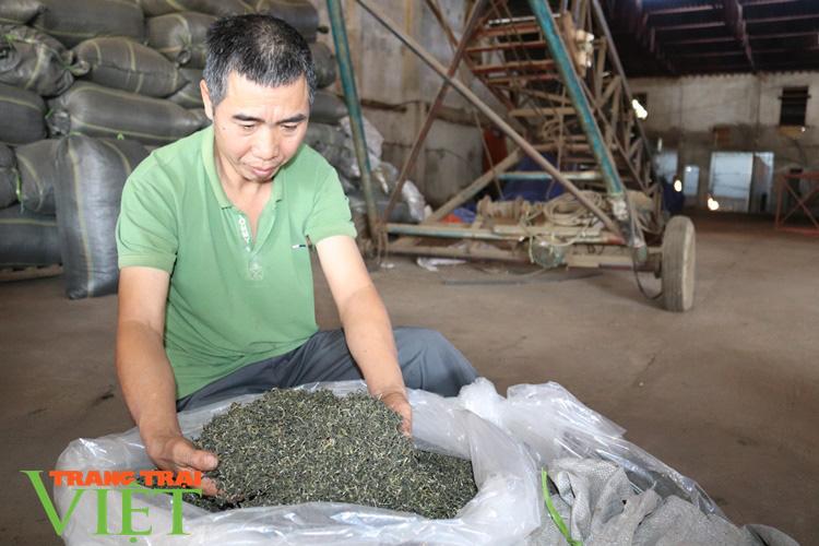 Hiệu quả phong trào nông dân thi đua sản xuất, kinh doanh giỏi ở Thuận Châu - Ảnh 1.