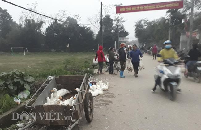 Chuyện ghi ở ổ dịch cúm A/H5N6 Hà Nội: Phập phồng lo trắng tay - Ảnh 2.