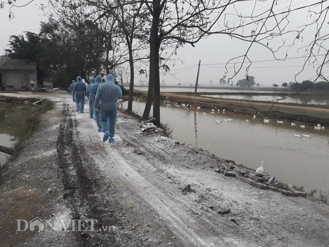 Chuyện ghi ở ổ dịch cúm A/H5N6 Hà Nội: Phập phồng lo trắng tay - Ảnh 6.