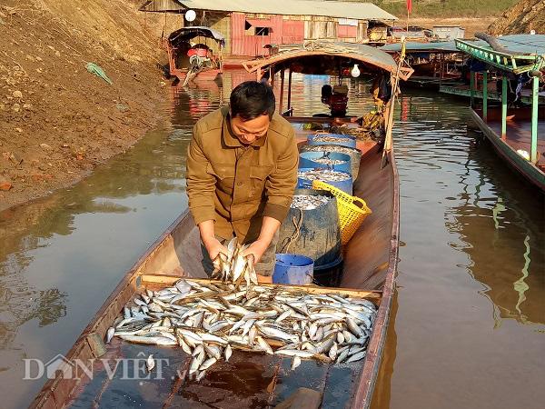 Về Quỳnh Nhai thưởng thức đặc sản cá tép dầu - Ảnh 2.