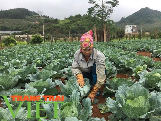 Nông dân dạy nông dân, mang lại hiệu quả kinh tế cao - Ảnh 2.