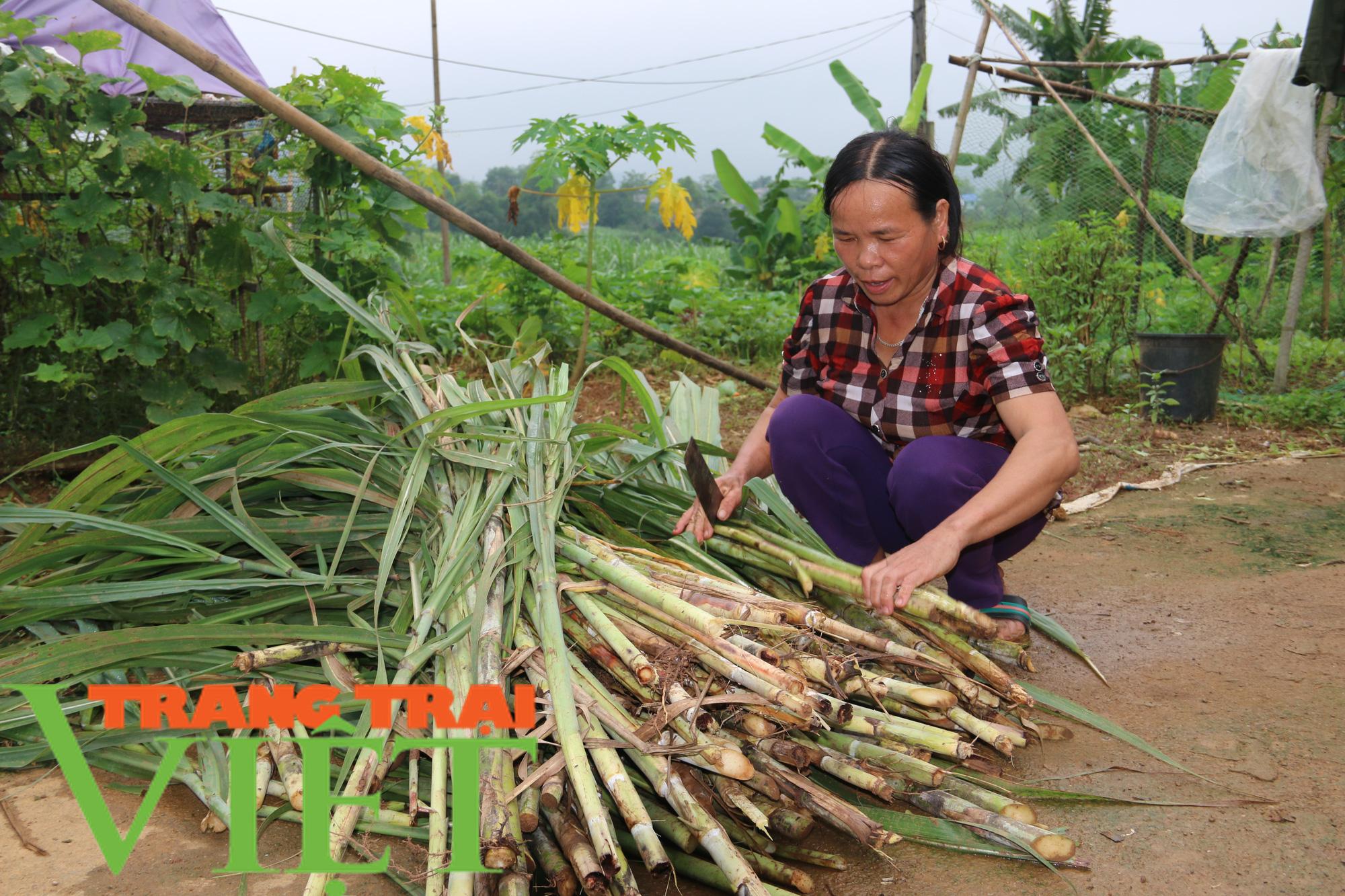 Hiệu quả mô hình nuôi trâu vỗ béo của Hội Nông dân xã Dũng Phong - Ảnh 4.