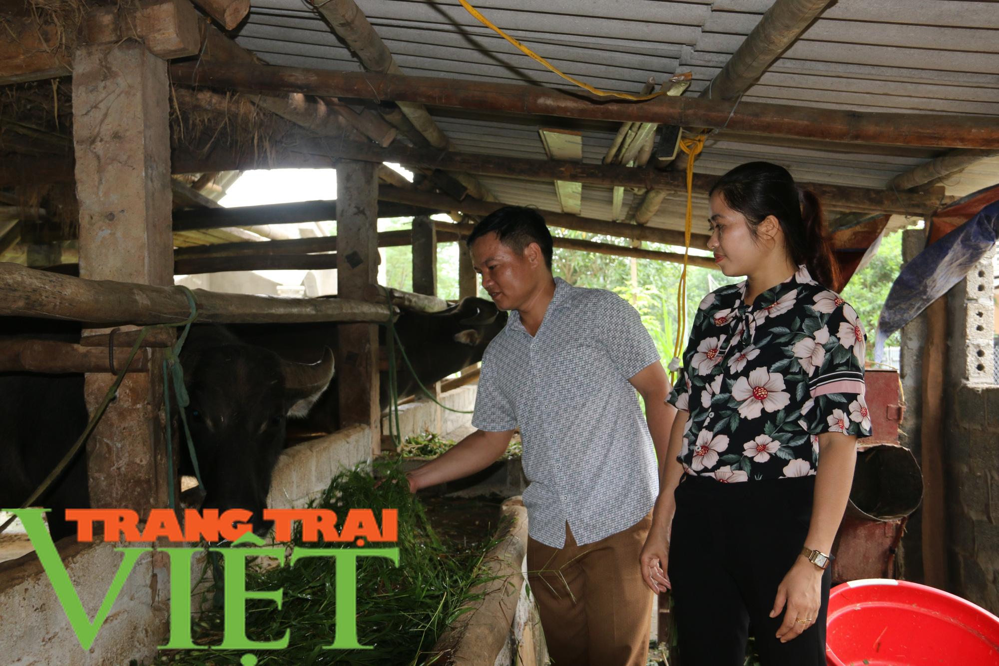 Hiệu quả mô hình nuôi trâu vỗ béo của Hội Nông dân xã Dũng Phong - Ảnh 3.