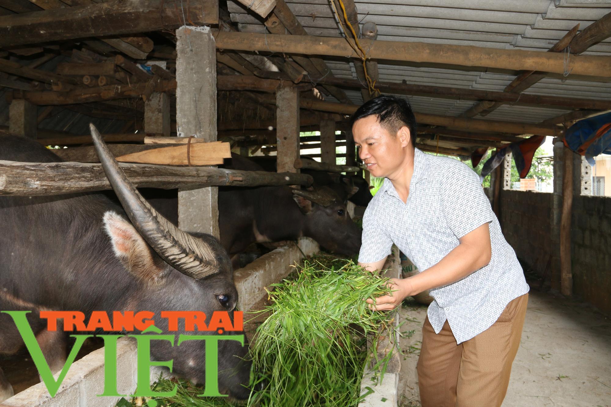 Hiệu quả mô hình nuôi trâu vỗ béo của Hội Nông dân xã Dũng Phong - Ảnh 2.