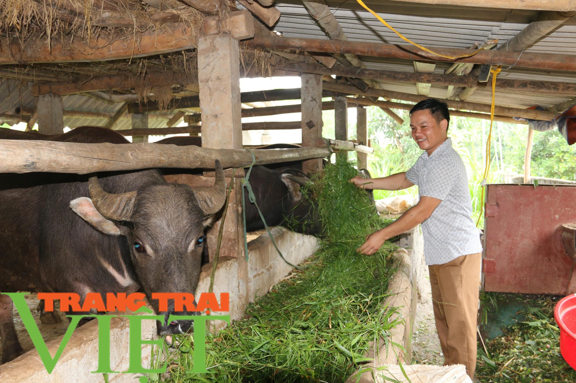 Hiệu quả mô hình nuôi trâu vỗ béo của Hội Nông dân xã Dũng Phong - Ảnh 1.