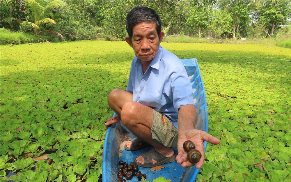 Chùm ảnh: Nuôi loài ốc bươu đen, lão nông miền Tây đổi đời