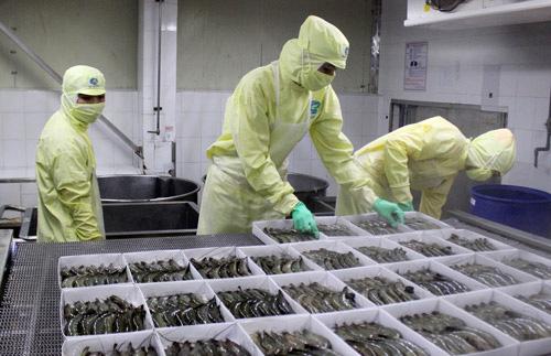 Cơ hội từ EVFTA: Chuẩn bị hành trang cho con tôm Việt sang EU - Ảnh 2.