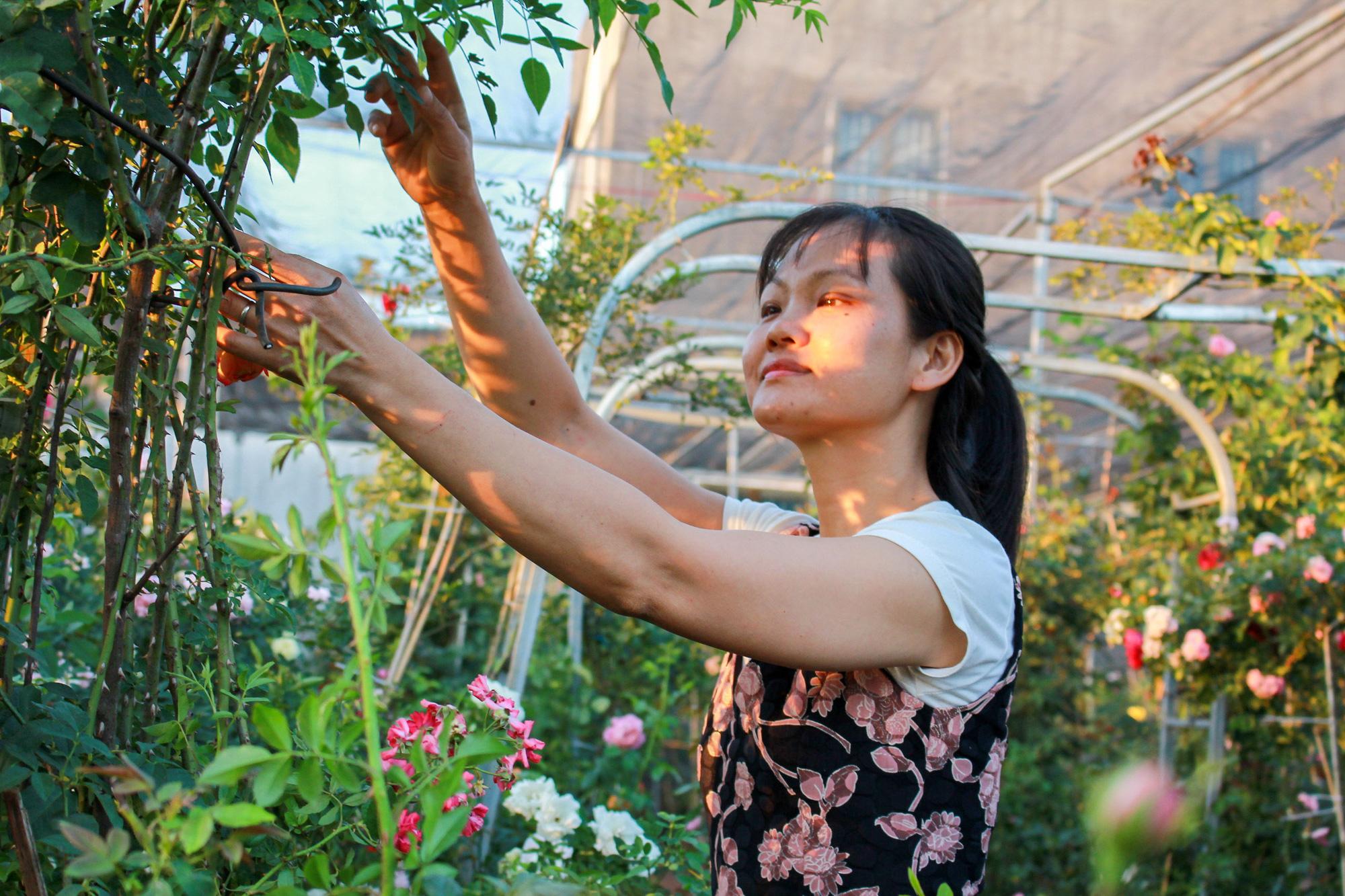Vườn hồng 400 loài đẹp ngẩn ngơ của kỹ sư bỏ phố về núi - Ảnh 6.