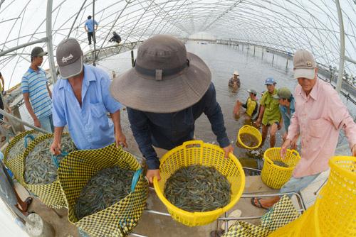 Cơ hội từ EVFTA: Chuẩn bị hành trang cho con tôm Việt sang EU - Ảnh 3.