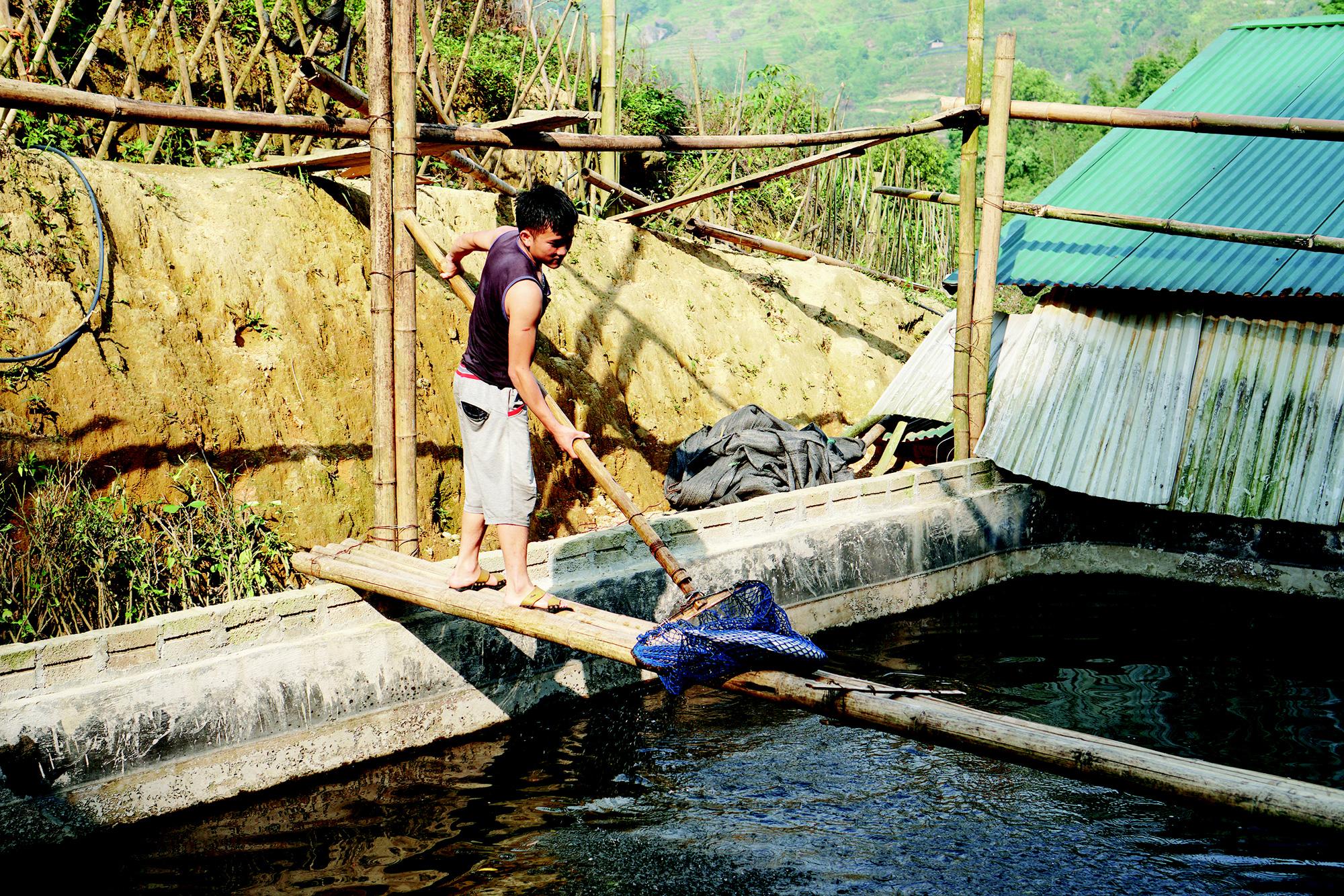 Trang trại cá nước lạnh đã tạo công ăn việc làm ổn định cho một số lao động địa phương.