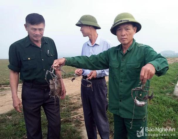 Nông dân Thanh Chương dùng khói ống bô xe máy bắt chuột - Ảnh 3.