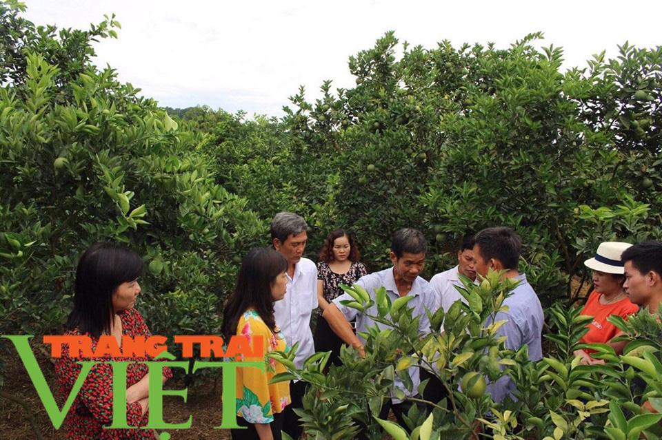 Hội Nông dân Sơn La hỗ trợ các hội viên phát triển kinh tế - Ảnh 1.