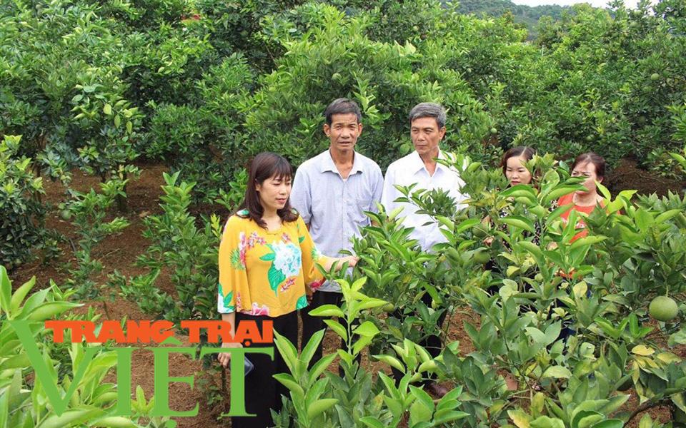Hội Nông dân Sơn La: Đồng hành cùng nông dân phát triển kinh tế