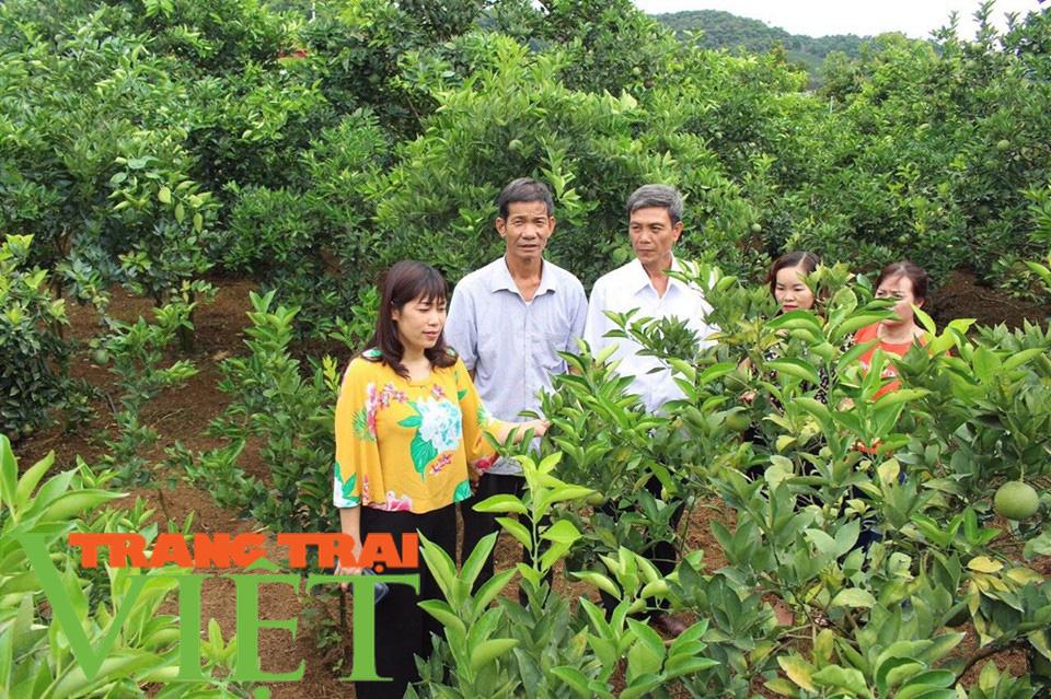 Hội Nông dân Sơn La hỗ trợ các hội viên phát triển kinh tế - Ảnh 6.