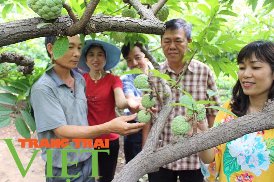 Hội Nông dân Sơn La hỗ trợ các hội viên phát triển kinh tế - Ảnh 8.