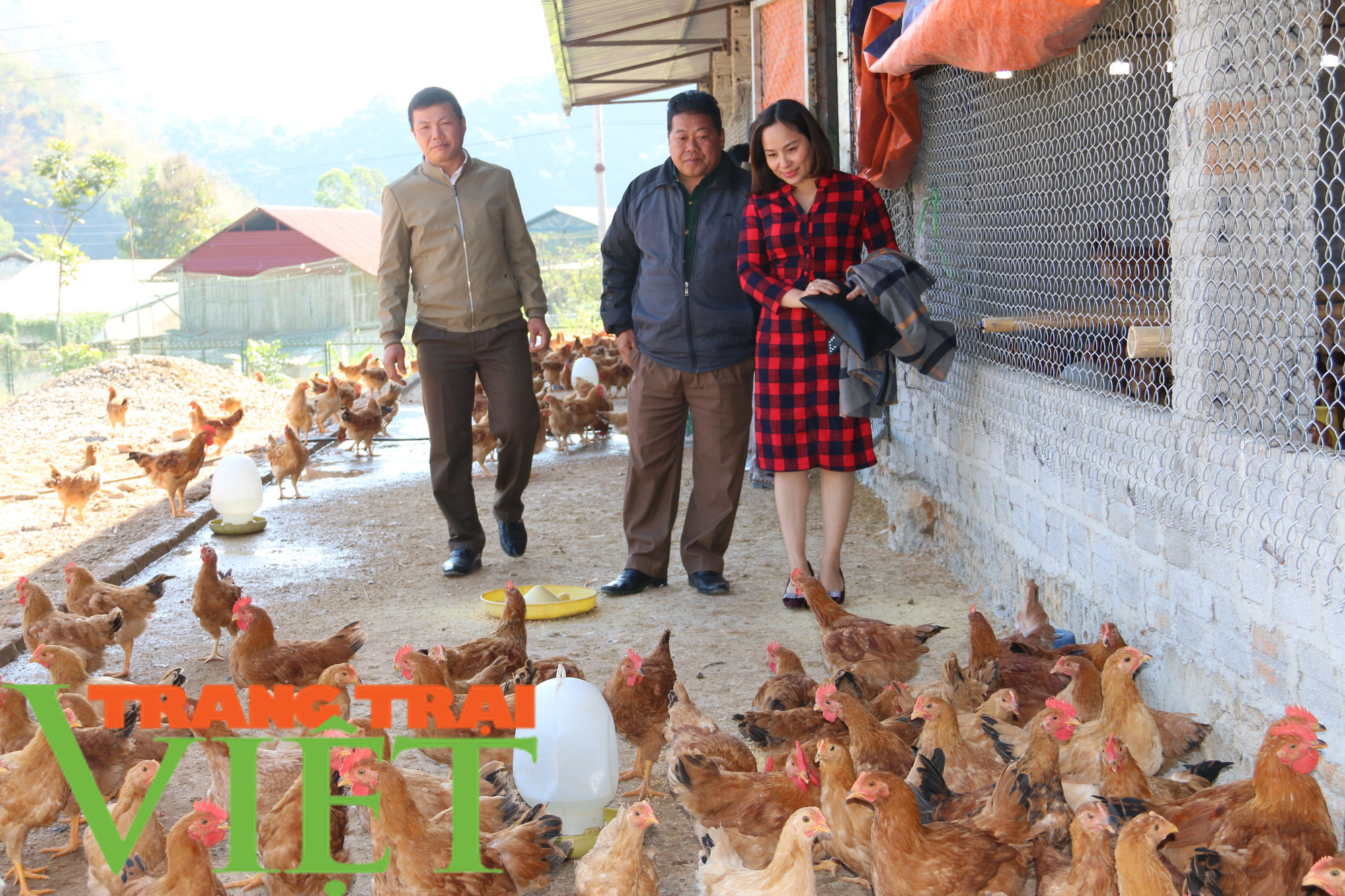 Hội Nông dân Sơn La hỗ trợ các hội viên phát triển kinh tế - Ảnh 7.