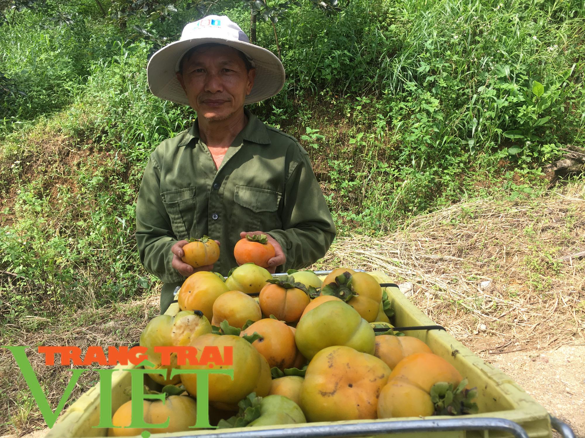 Hội Nông dân Sơn La hỗ trợ các hội viên phát triển kinh tế - Ảnh 2.