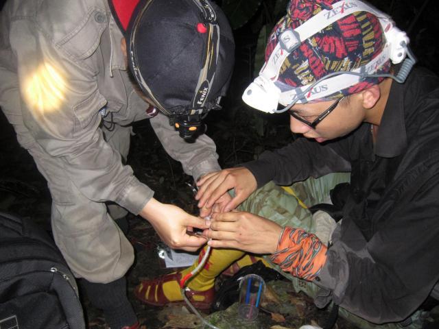 Ly kỳ chuyện đêm lạnh đi tìm loài thạch sùng mí bí ẩn ở Vịnh Hạ Long