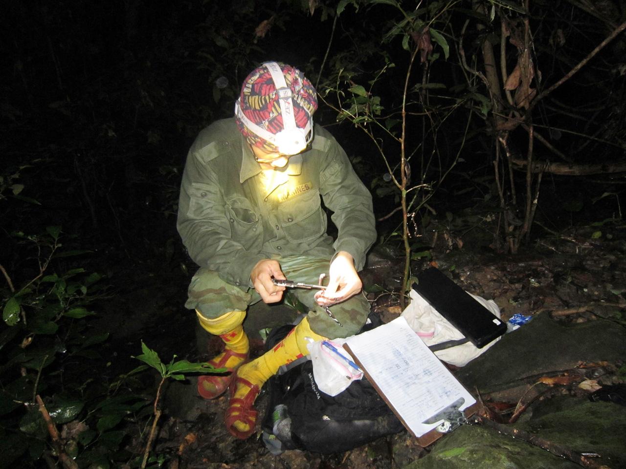 Ly kỳ chuyện đêm lạnh đi tìm loài thạch sùng mí bí ẩn ở Vịnh Hạ Long - Ảnh 7.