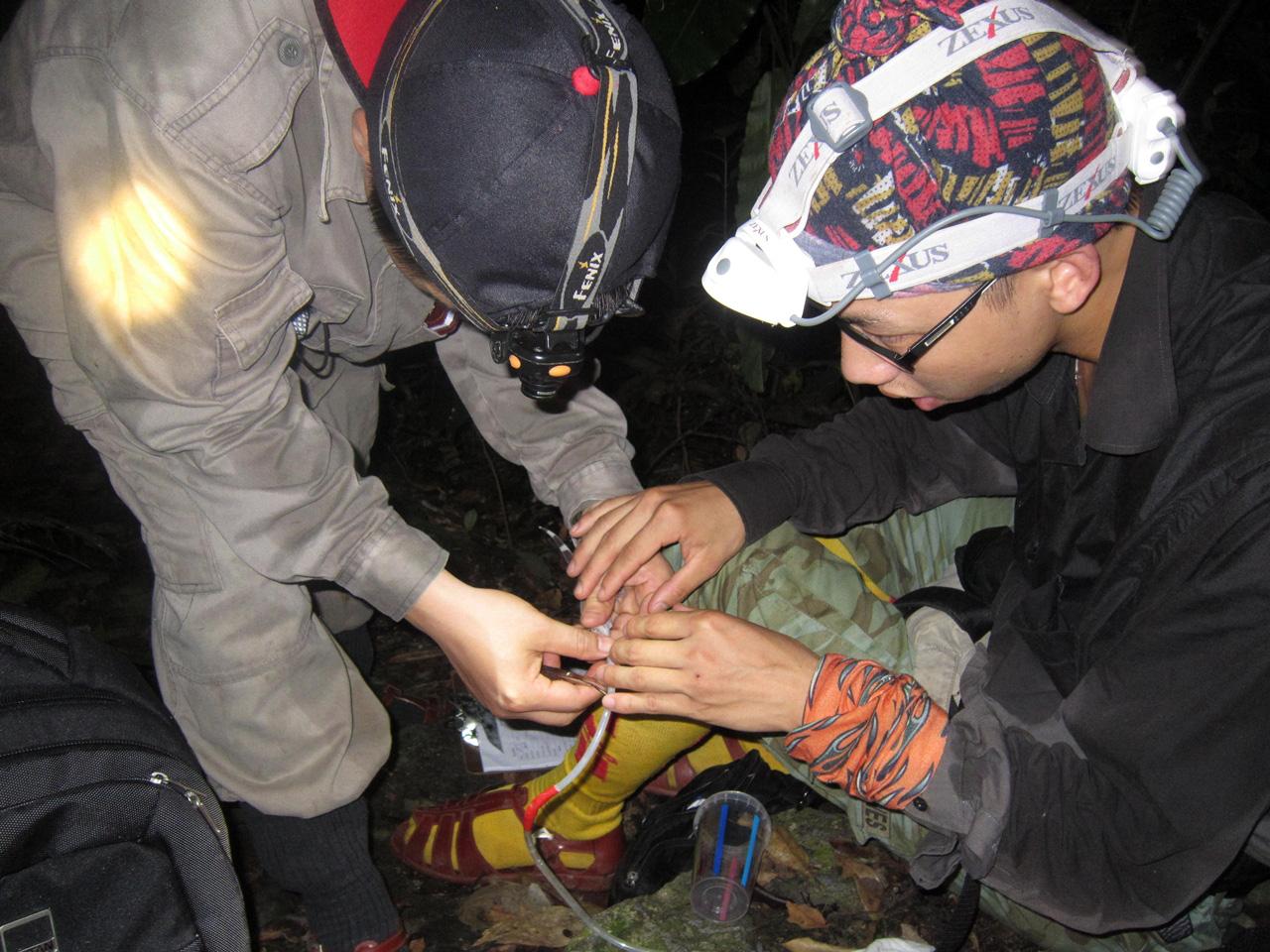Ly kỳ chuyện đêm lạnh đi tìm loài thạch sùng mí bí ẩn ở Vịnh Hạ Long - Ảnh 8.