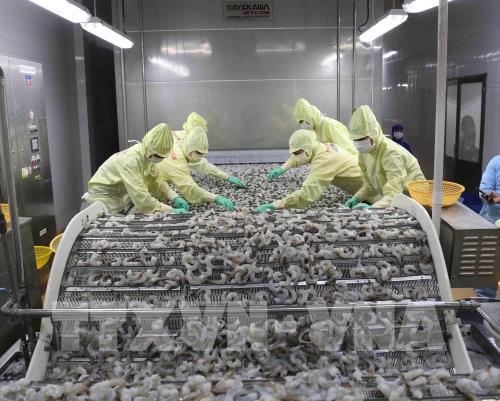 Hoa Kỳ điều tra lẩn tránh thuế với tôm xuất khẩu của Thủy sản Minh Phú - Ảnh 1.