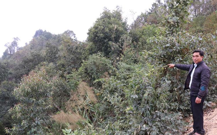 Bản Lầm không lầm trong công tác quản lý, bảo vệ rừng