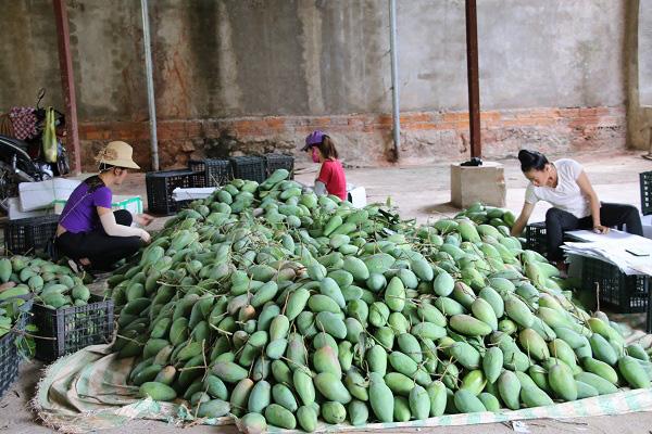 Nông dân Sơn La tích cực tham gia xây dựng nông thôn mới - Ảnh 7.