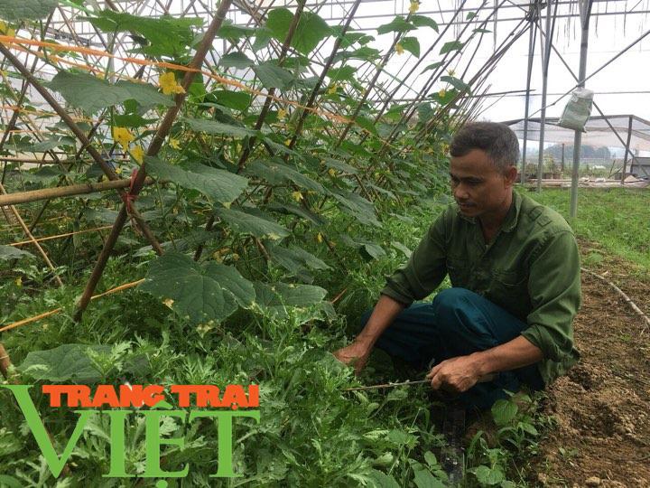 Hoà Bình: Phát triển nông nghiệp thông minh và sản xuất an toàn theo chuỗi - Ảnh 1.