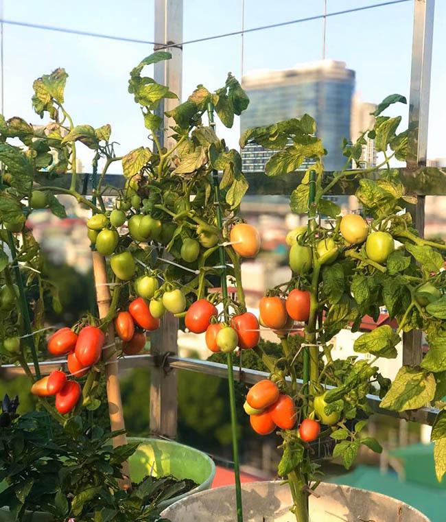 """Choáng với trang trại nuôi trồng """"thập cẩm"""" trên nóc nhà giữa Thủ đô - Ảnh 11."""