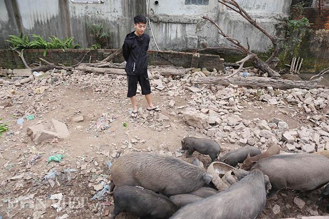 Lạ: Nuôi đàn lợn rừng giữa quận Đống Đa, thủ đô Hà Nội - Ảnh 1.